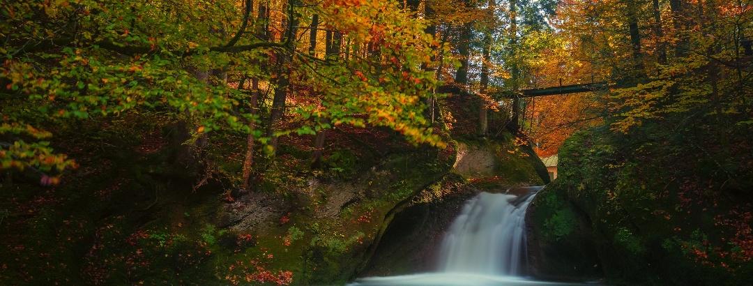 Wasserfall in einem Wald