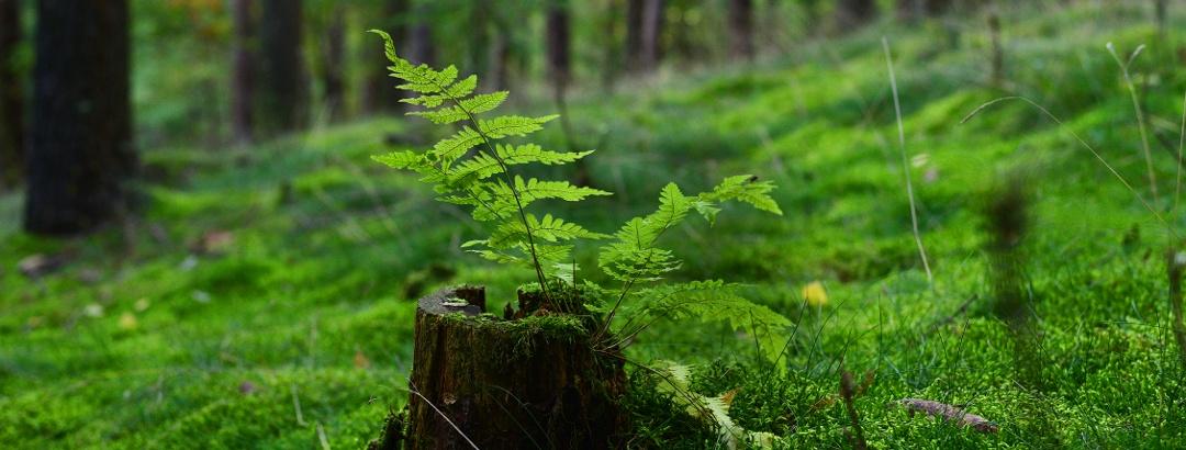 Natur Detailaufnahme
