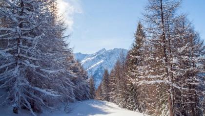Schneeschuhtrail Rosswald