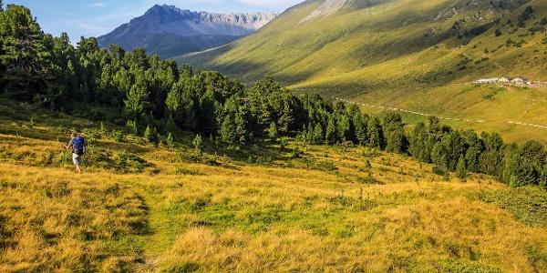 Auf der Alp Tamangur Dadora.