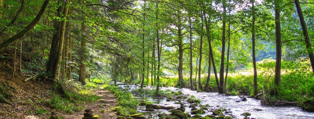 Das Wasserwegle entlang der Eyach.
