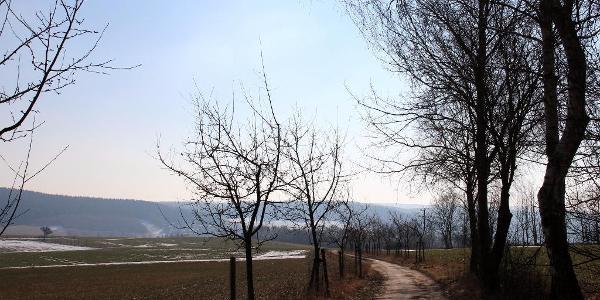 Blick in Richtung Thalheim