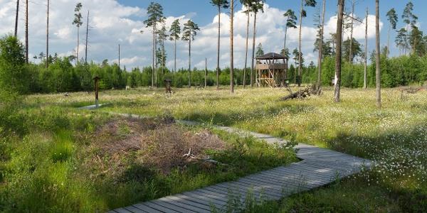 Moorlehrpfad im Pöllwitzer Wald