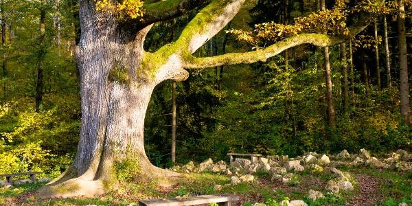 Labyrinth auf dem Naturpfad Sinneswandel