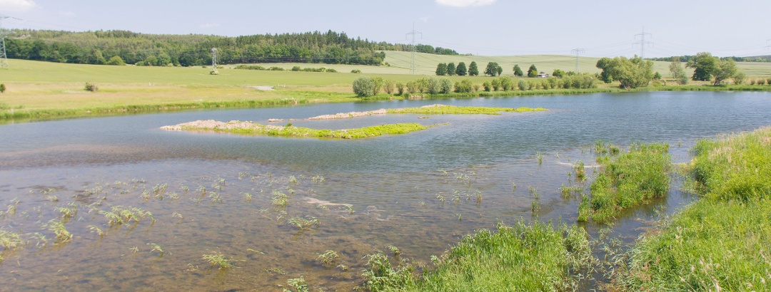 Friesnitzer See