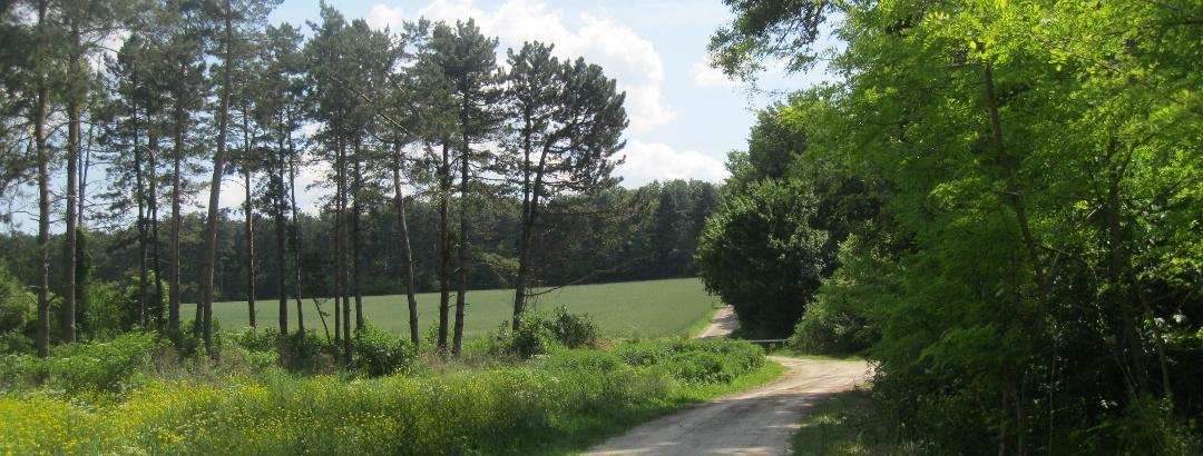 Im Draßburger Wald