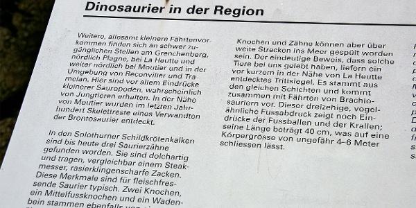 Infotext zu Dinosauriern in der Region Solothurn.