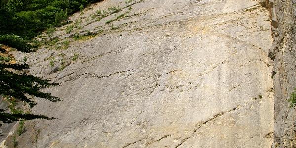 Die Kalksteinwand im Steinbruch Lommiswil.