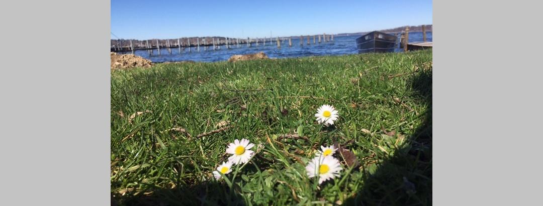 Frühling am Chiemsee