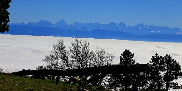 Aussicht zu den Berner Alpen.