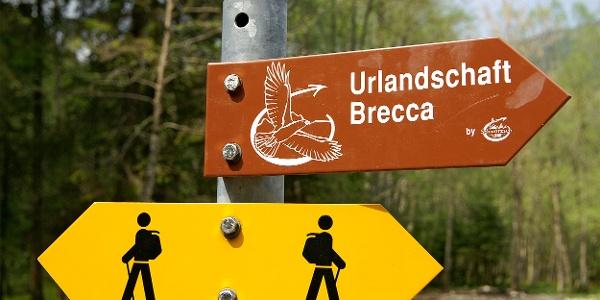 Hinein in die Urlandschaft Brecca.