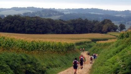 Vignes: Chemin de Cabirou