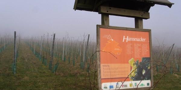 Die Weinberge oberhalb von Rott noch im Morgennebel
