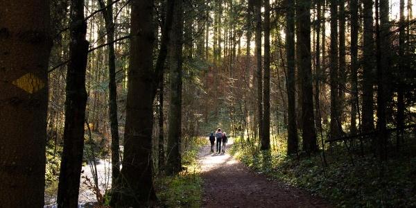Durch den Wald kurz nach der Mühle