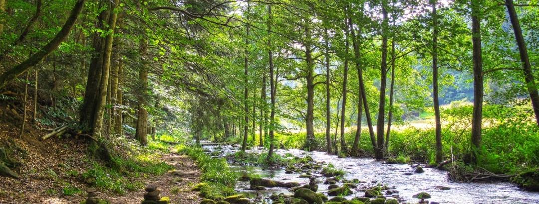 Ins Tal der Lehmänner - Eyach mit Wasserweg