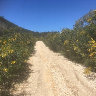 Colourful trail.