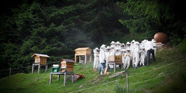 The bee-village