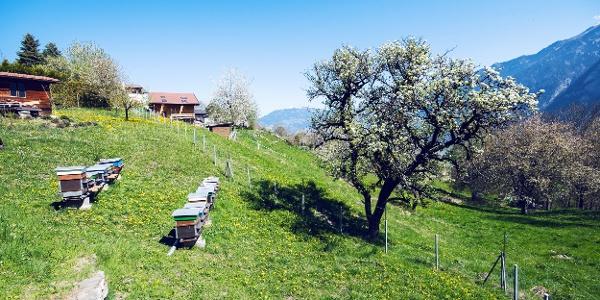 Frühling auf dem Plateau de Vérossaz