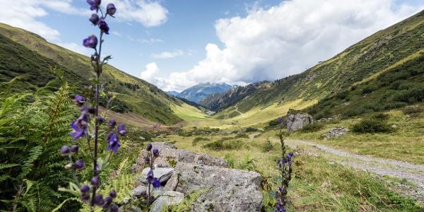 Weg zur Alp Nova