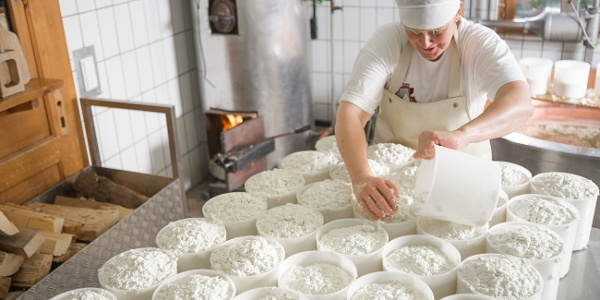 Sura Kees Produktion auf der Alp Nova