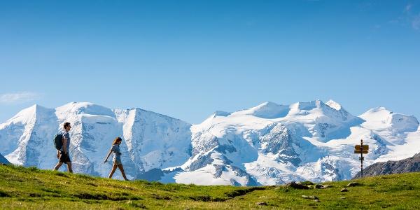 Wandern ab der Alp Languard mit Aussicht auf das Bernina-Massiv