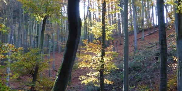 Herbstwald am Molesbach
