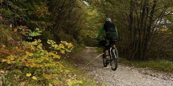 Herbstfarben auf dem Forstweg in Richtung Carobbi