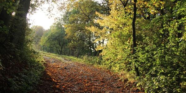 Lichtblicke im strahlenden Herbst
