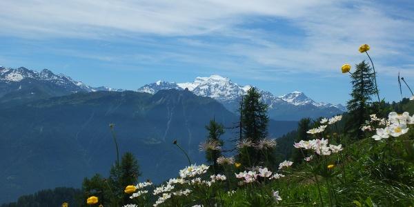 Blumenwiese mit Aussicht auf auf die Bergkette Combins