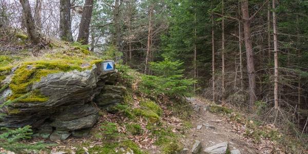 Átalakult kőzetek és fenyőerdők - alpokalji hangulat