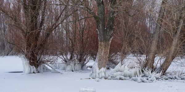 Jégbe fagyott hullámverés a vízben növekvő fákon