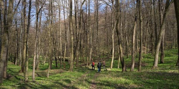 Sarvalyi erdő