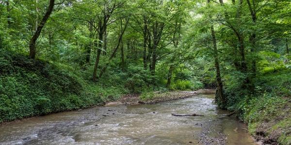 Gaja Creek