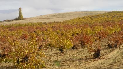 Es wird wieder Wein angebaut