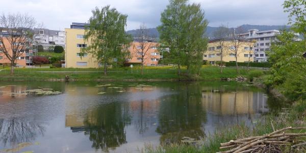 Krebsbach