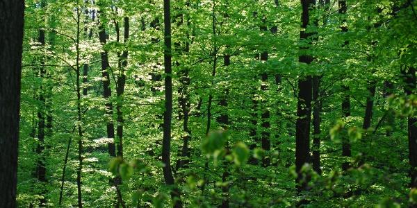 Im Wienerwald bei der Toiflhütte