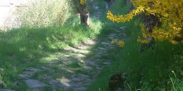 Alte Wege