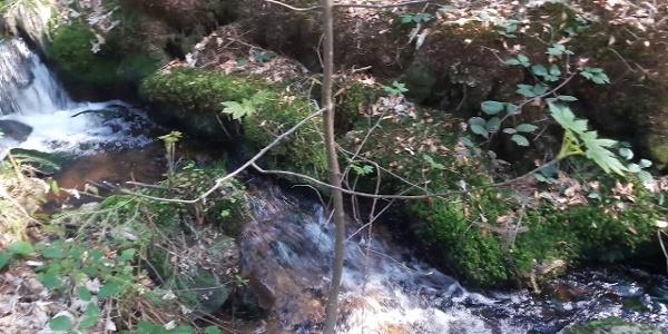 Mühlgrabenweg unter Hirschenstein und Schopf