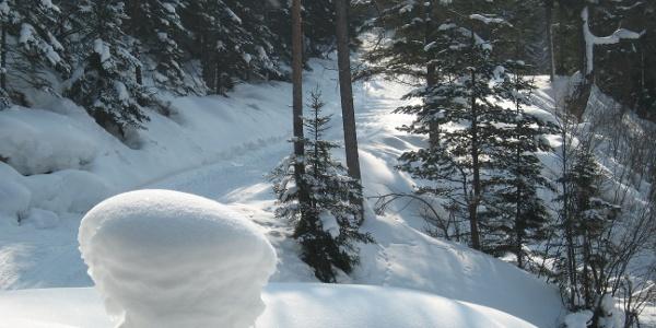 Tiefverschneite Wälder warten auf Langlauffans
