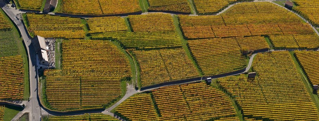 Haus des Bündner Weins in Jenins