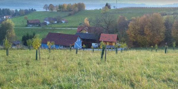 Buschenschank_Altes_Winzerhaus