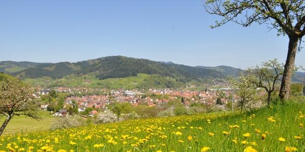"""Panoramablick vom """"Schänzle"""""""