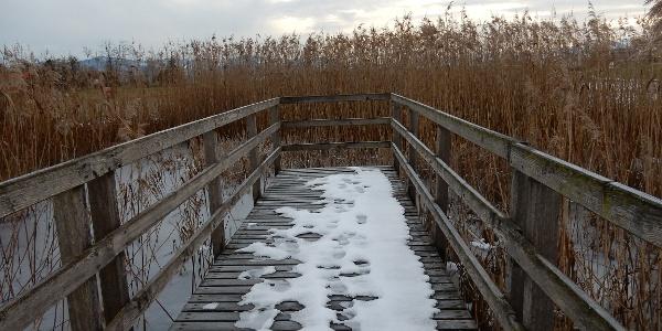 Winteraspekt beim Langacher-Weiher