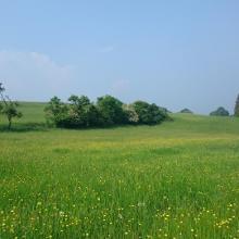 Landschaft bei Krälingen