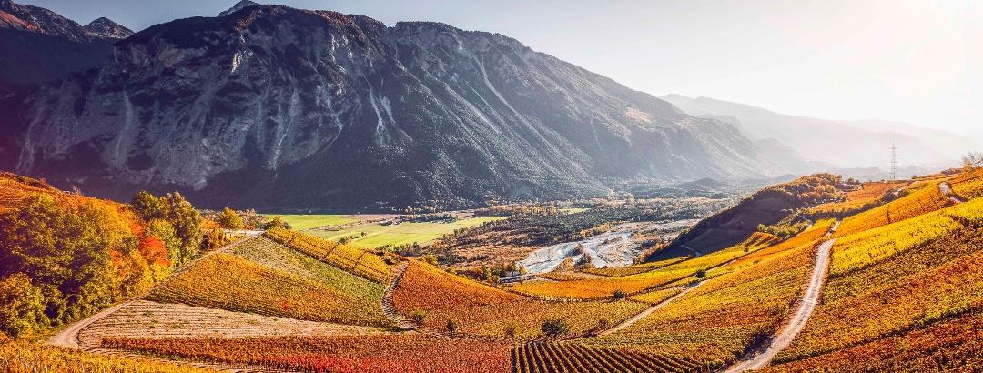 Vineyards between Leuk and Varen