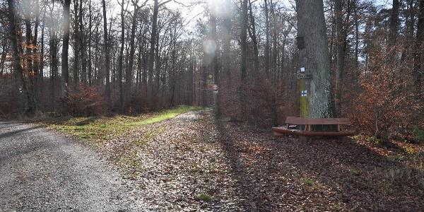 Naturdenkmal Johannes-Konath-eiche