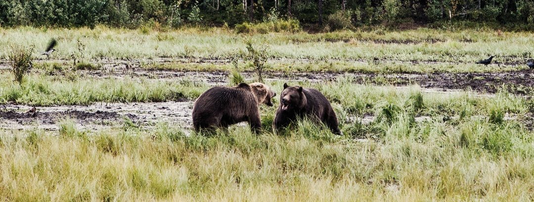 Bears in the swampland