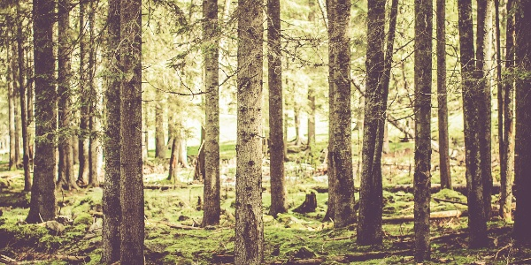 Waldbaden am Slow Trail Zwergsee