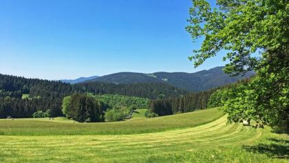 Aussicht in den Schwarzwald