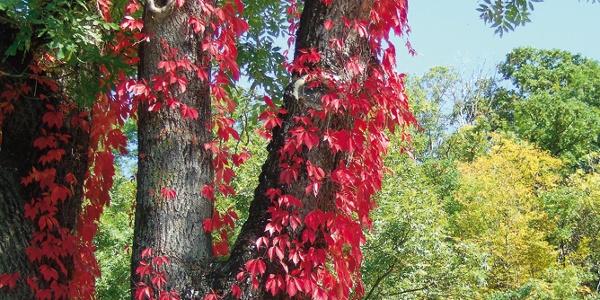 Farben des Herbstes bei Burleswagen